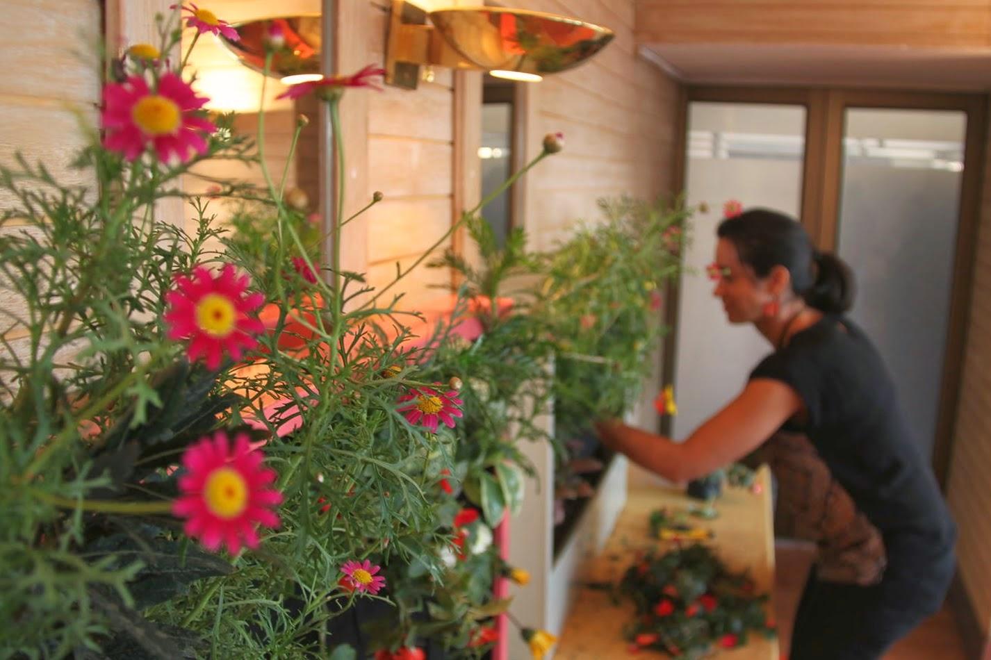 cursos de jardines verticales en Madrid