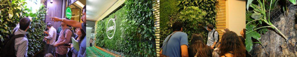 Curso de jardines verticales en Chile - Visita2