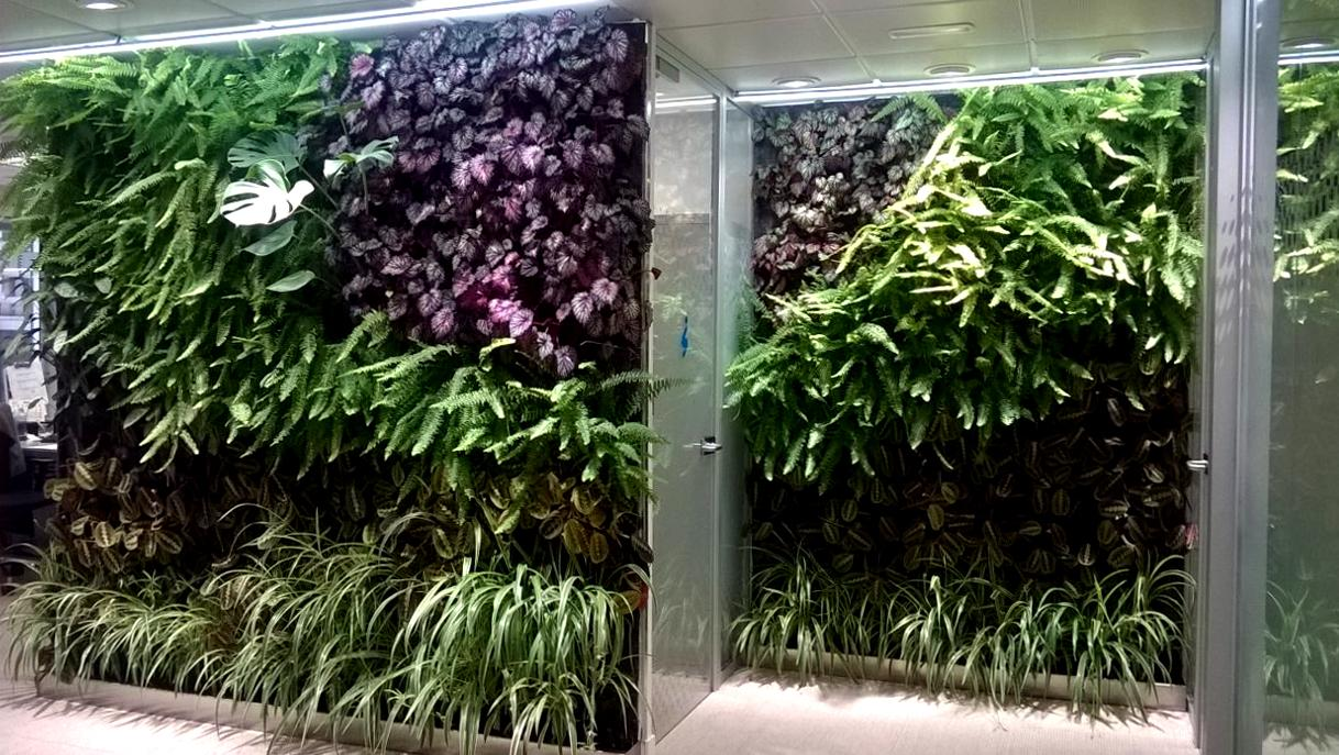 Jardines verticales de interior f p en madrid singulargreen for Como hacer un jardin vertical de interior