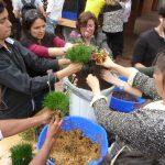 Curso de jardines verticales y cubiertas vegetales en Colombia