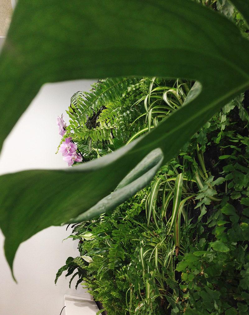 Plantas de interior para jardines verticales