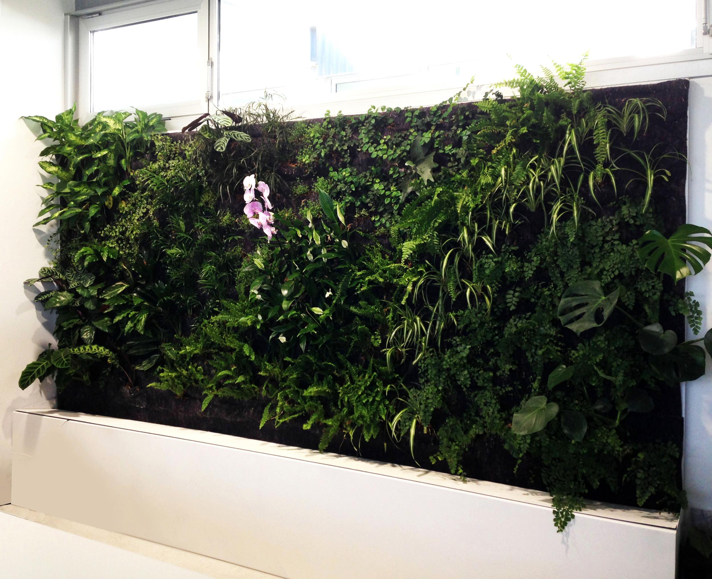 Jard n vertical en nuestra nueva oficina - Plantas para jardines verticales ...
