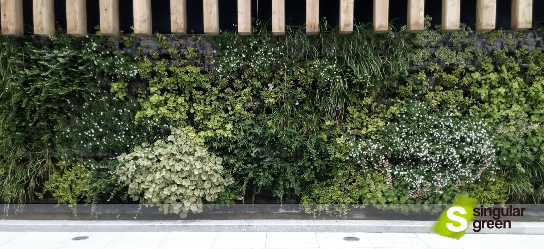 Nuestro primer jard n vertical en bilbao singulargreen - Jardines de bilbao ...