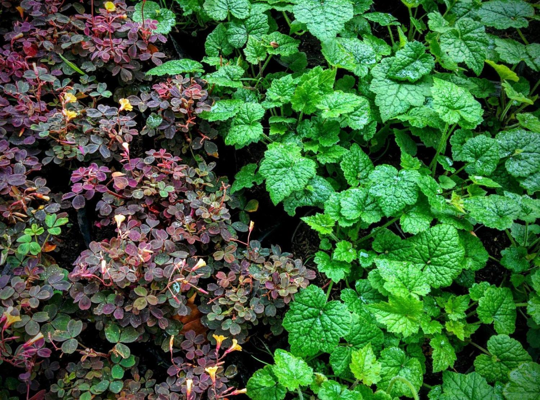 C mo hacer un jard n vertical en colombia singulargreen for Riego jardin vertical