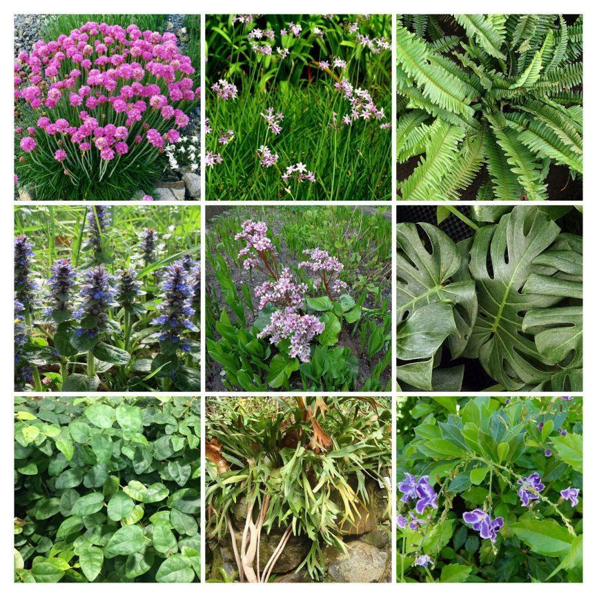 las especies que mejor funcionan en jardines verticales en colombia