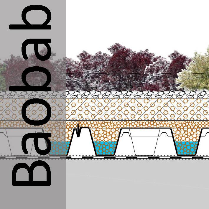 Sección Cubierta Vegetal Baobab