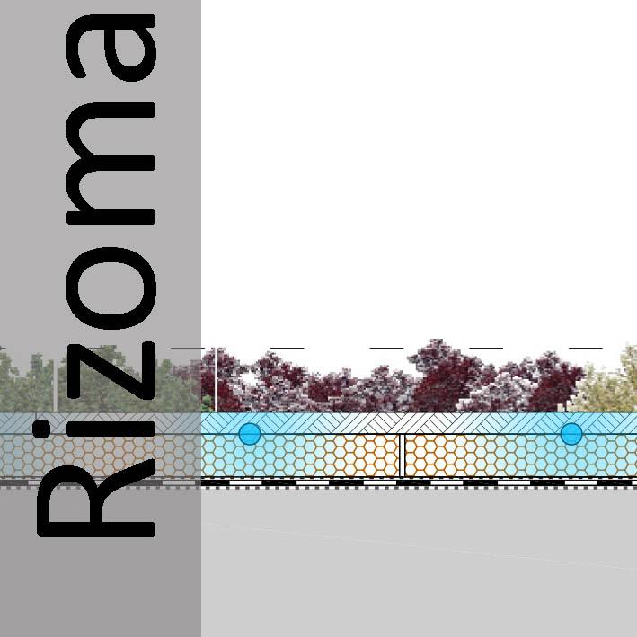 Sección Cubierta Vegetal Rizoma