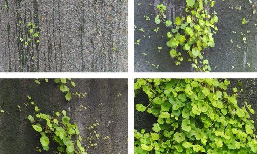 Jardín vertical LeafSkin - Evolución