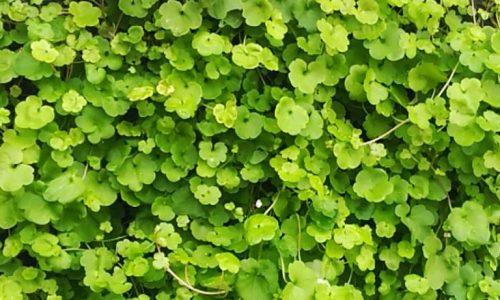 Jardín vertical LeafSkin
