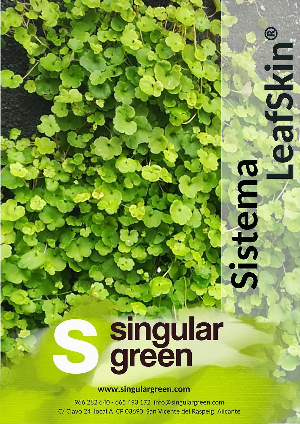 Dossier técnico LeafSkin