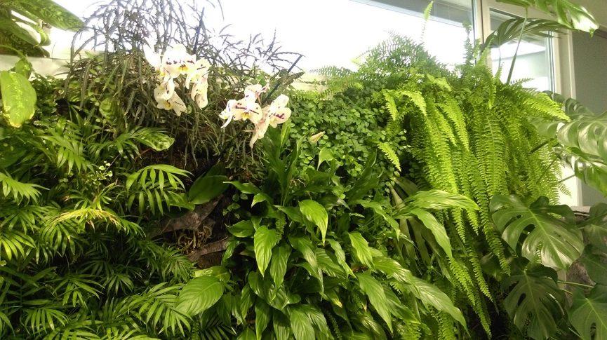 Orquidea en jardín vertical