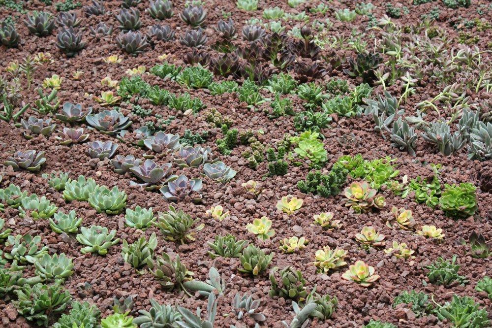 cubierta vegetal fitum alicante