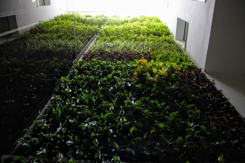 jardín vertical interior jardines verticales greenwall muro vivo muro verde