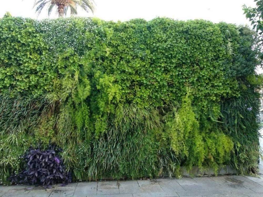Jardines verticales en Mérida