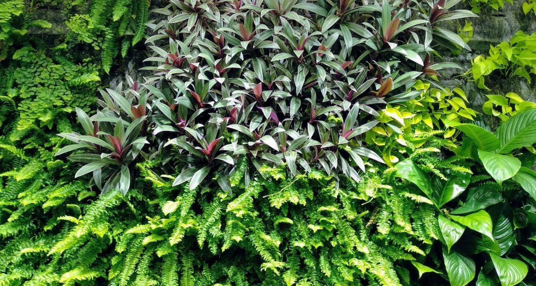 Detalle de densidad de plantas en un jardín vertical en oficinas de Madrid