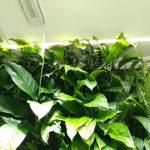 Detalle de plantas en jardin vertical en oficinas de Madrid