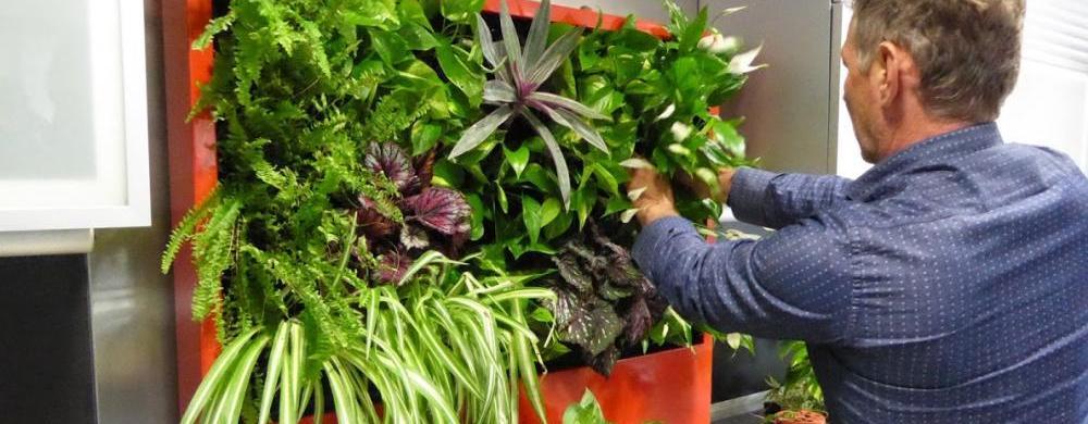 Curso de cubiertas vegetales en Alicante
