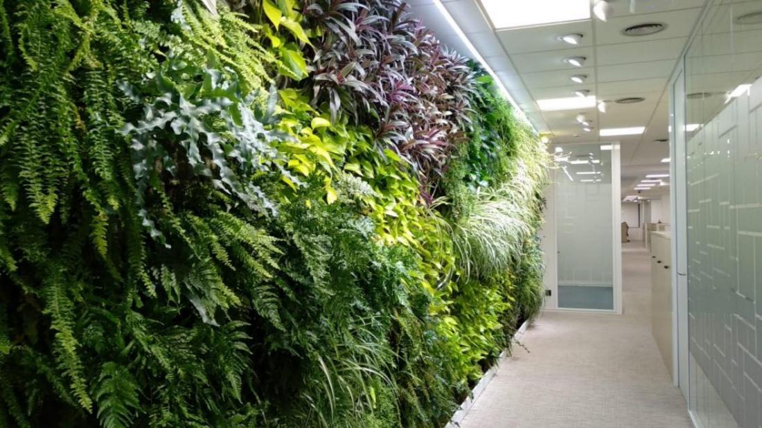 Jardines verticales nuevas oficinas de Ferring en Madrid