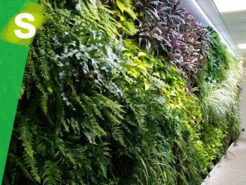 jardin_vertical_madrid_ferring
