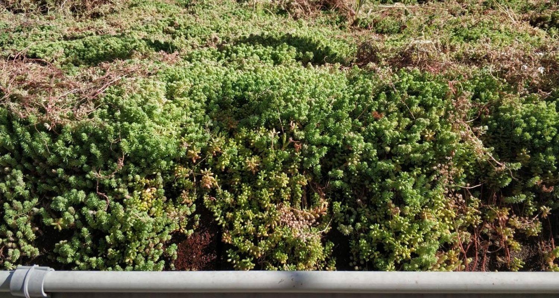 detalle de plantas grasas para cubrir tejados