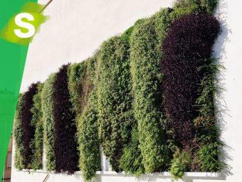 Tras jardines verticales en una medianera de Gandia