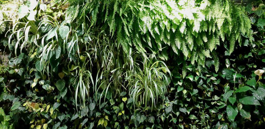 ¿Qué es un jardín vertical?