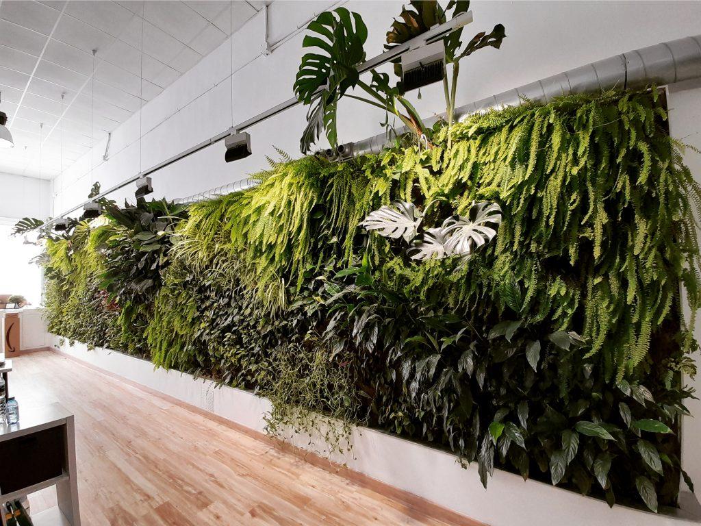 Jardín vertical en interior en nuestra oficina de  Alicante