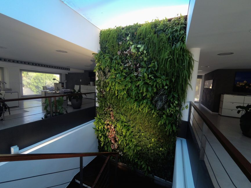 Jardín vertical de sistema F+P en interior en Santa Ponça en Mallorca
