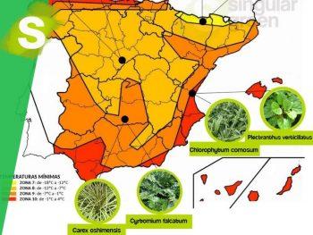 Plantas para jardines verticales según zonas climáticas