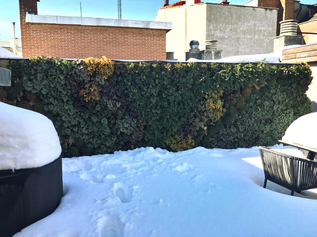 Jardín vertical nieve frío Filomena