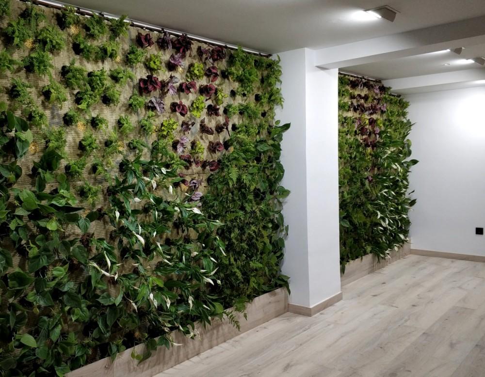 jardín vertical alicante recién plantado