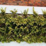 UrbanGreenUP cuadros vegetales