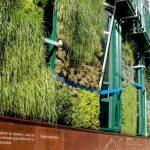 Especies del jardín vertical en Vitoria