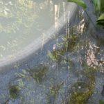 Plantación estanque artificial
