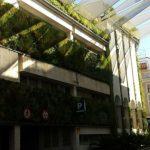 Plantas con sol y sombra en un jardín vertical