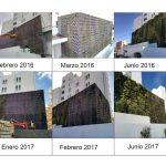 Evolución Jardín vertical