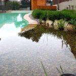 Area de regeneración de plantas de una piscina eco