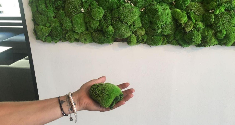 Detalle de musgo preservado