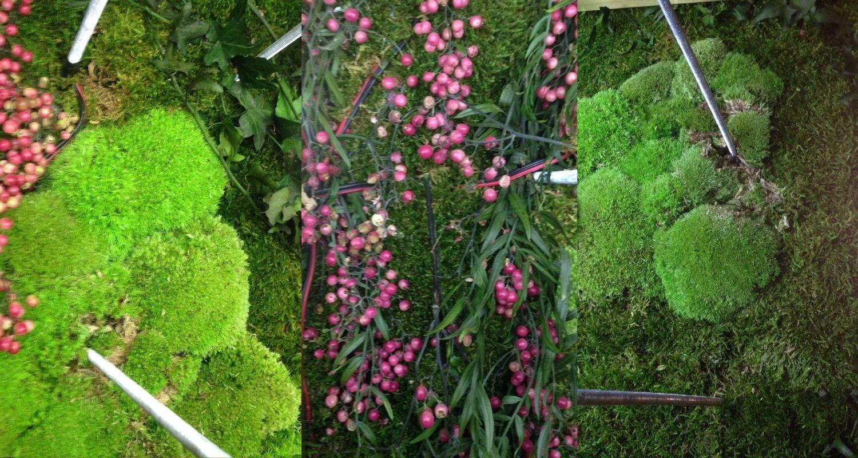 Planta preservada zoom