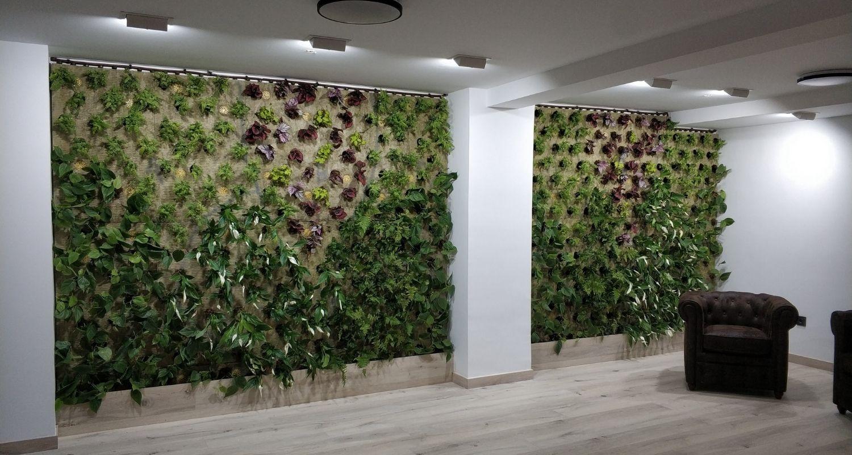 Estado de un jardín vertical recién plantado