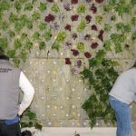Plantación de un jardín vertical en unas oficinas de Alicante