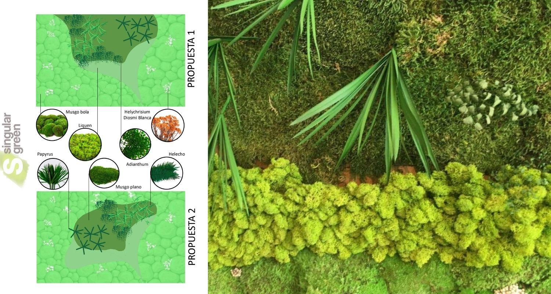 Diseño de muro verde preservado