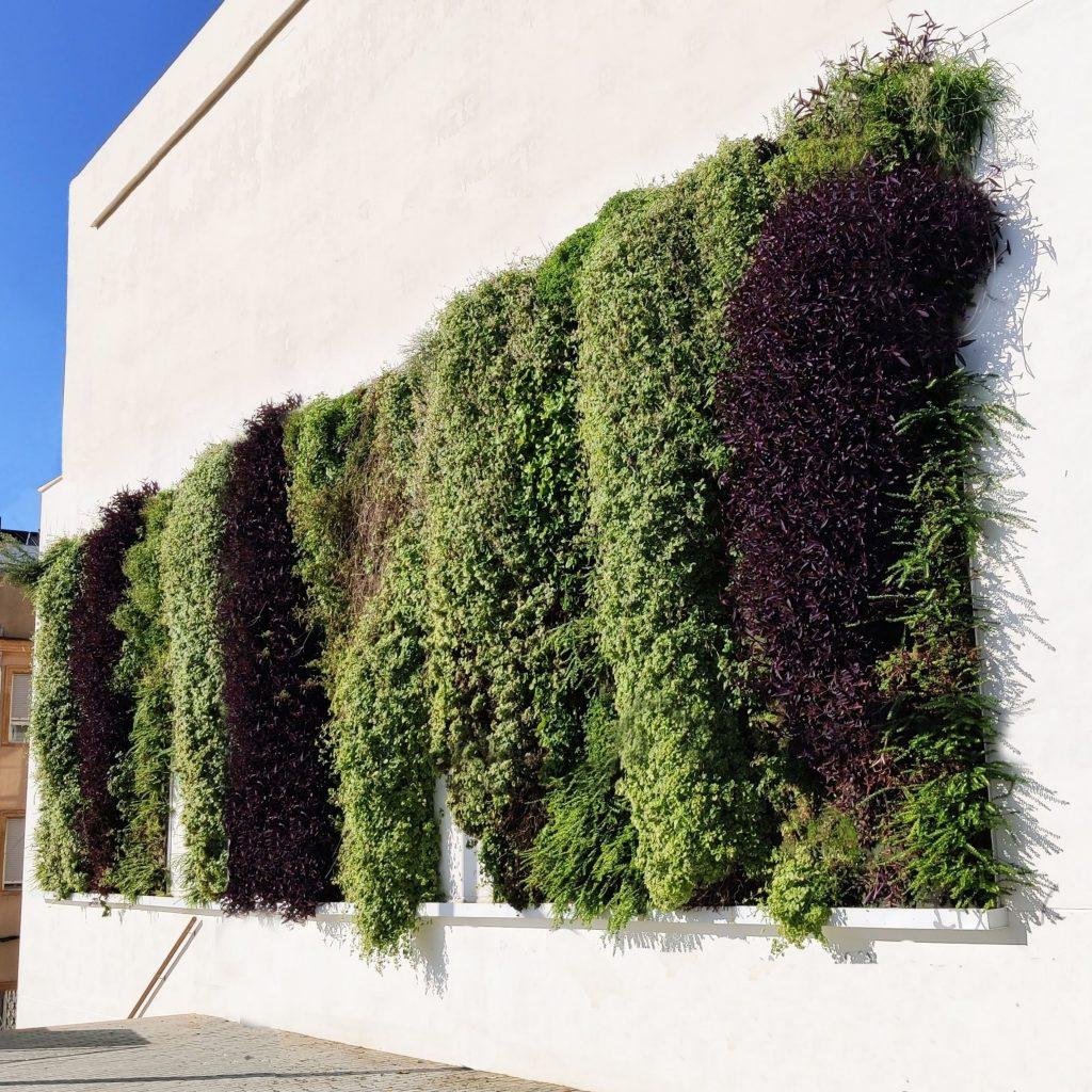 jardines verticales en Gandia. Valencia