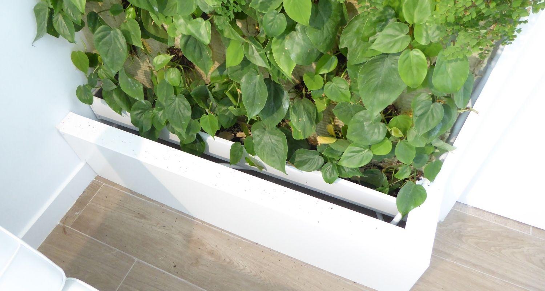 Detalle de recogida de riego de jardín vertical