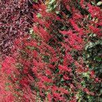 Detalle de plantas rojas colocadas en un jardín vertical en Madrid