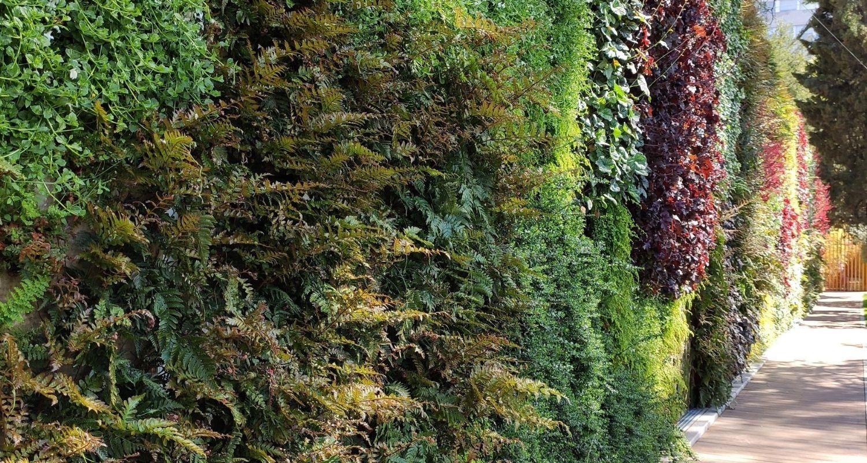 Detalle de las plantas de un jardín vertical exterior en Madrid