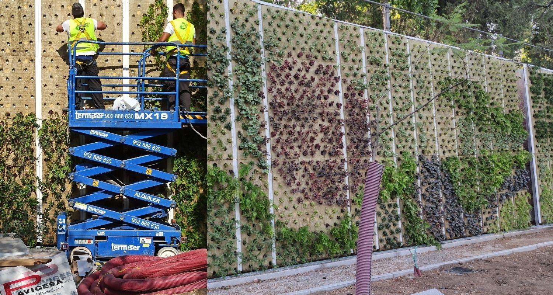 Plantación de un jardín vertical en Madrid