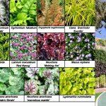 Selección de especies para un jardín vertical exterior en Madrid