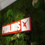 muro verde decoración tienda
