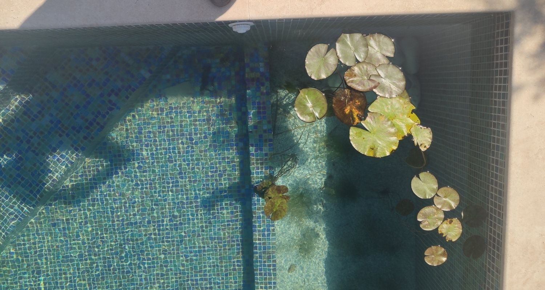 piscina sin cloro, plantas flotando